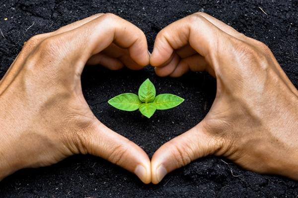 Plantar Árvore Benefícios